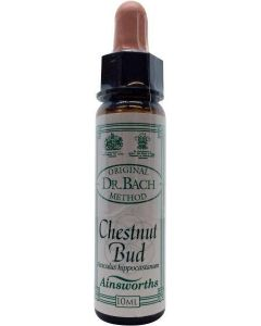 Ainsworths Chestnut bud Bach 10 ml