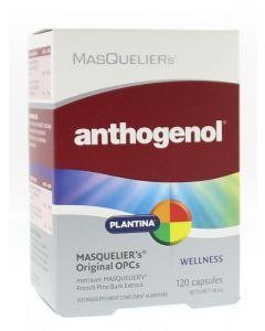 Anthogenol